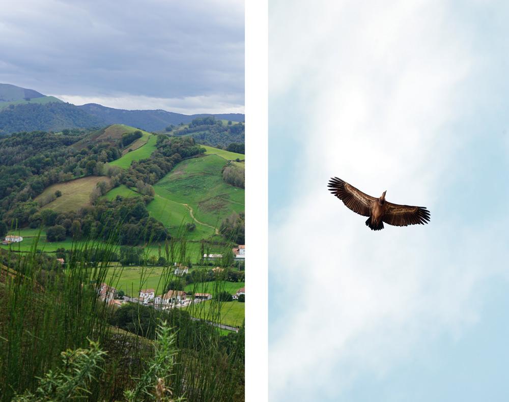 kintoa-vautour fauve-oteiza-aldudes