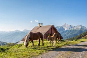 Chalets d'Iraty- Larrau-vue montagne basque