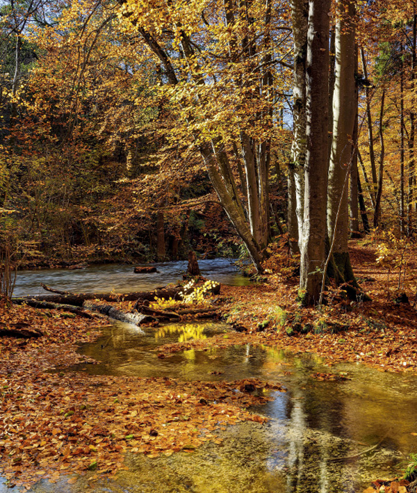 Chalets Iraty- forêt couleurs automne