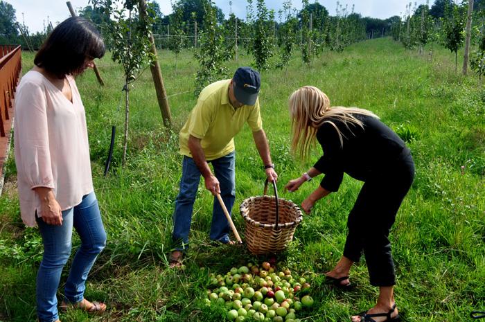 Sagarditegia Petritegi-récolte des pommes