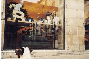 Babine Store Concept-1er shop pour chiens et chats-Biarritz