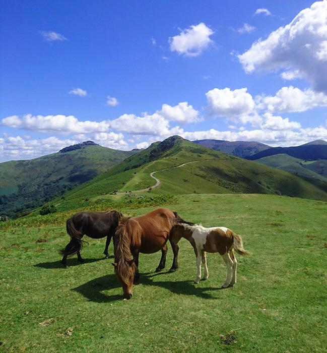 Pottoks-Rhune-Pays Basque en septembre-Gérald berry