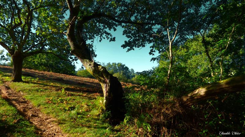 Urrugne Gr10-forêt- Olivier Elissalde