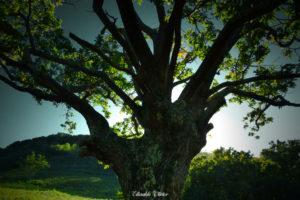 Urrugne-GR10-olivier Elissalde