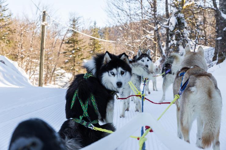 La Pierre St Martin-chiens de traîneaux-Nordic'espace
