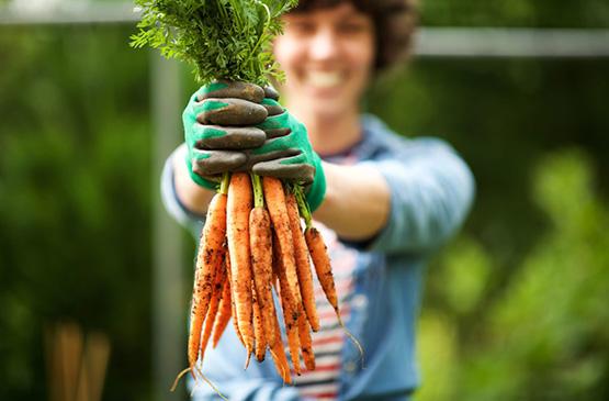 legume pays basque