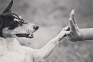 mediation animale