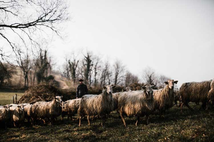 ferme-auberge-hasparren-vue-colline-pays-basque