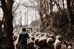 komeiteko-borda-eleveur-brebis-pays-basque