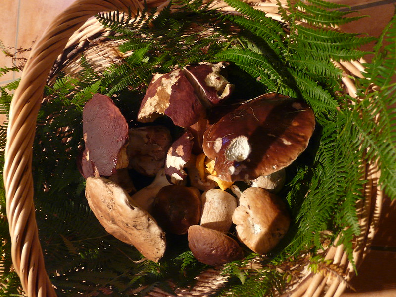champignon-frais-pays-basque
