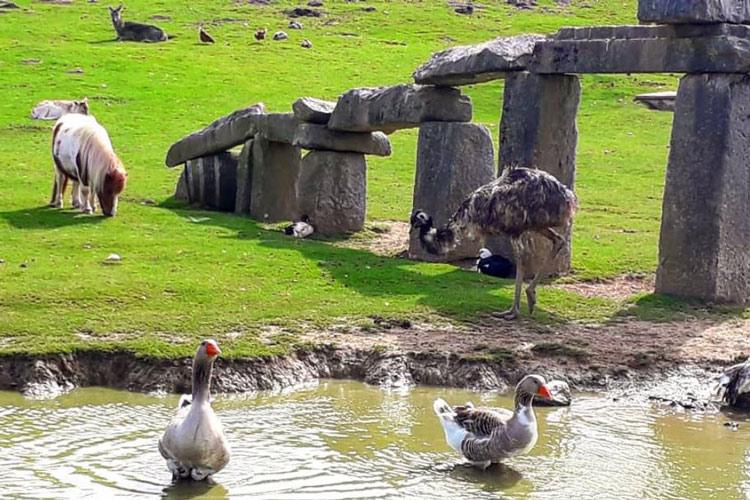 Parc naturel de pagoeta animaux