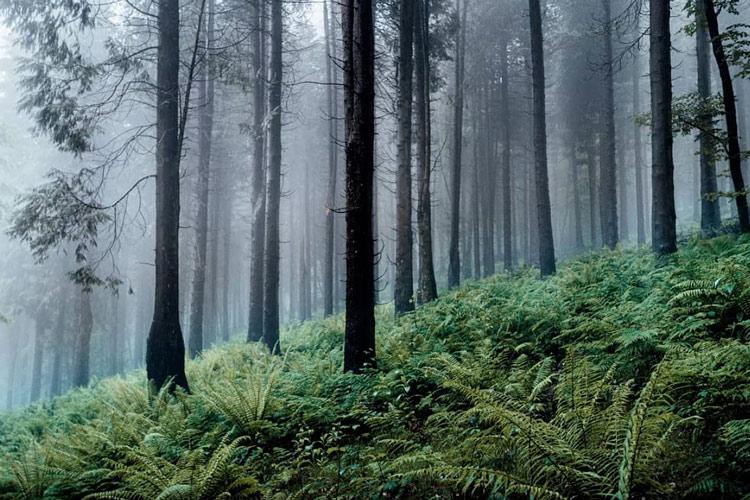 Bois du parc naturel de Pagoeta