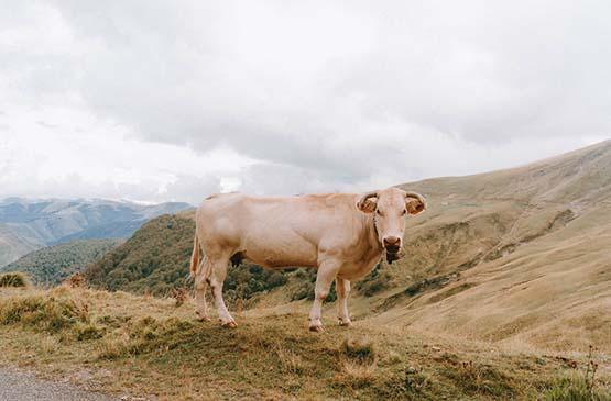 pays-basque-week-end-8-mai