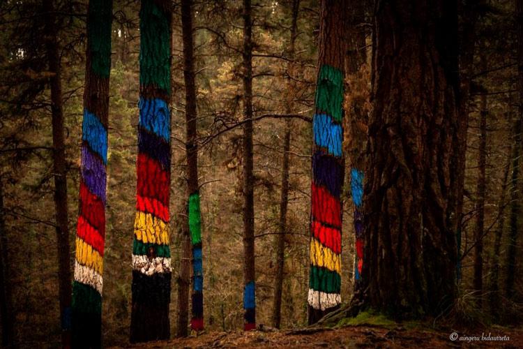 Foret d'Oma arbres peintures