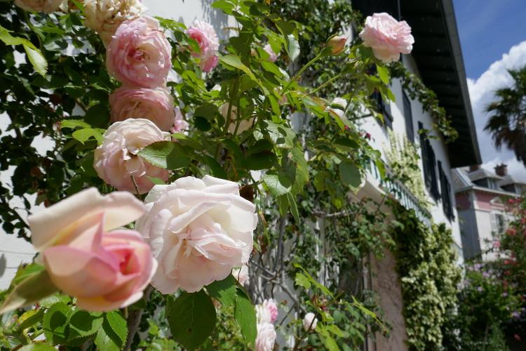 Jardin et villa Outsite Bidart