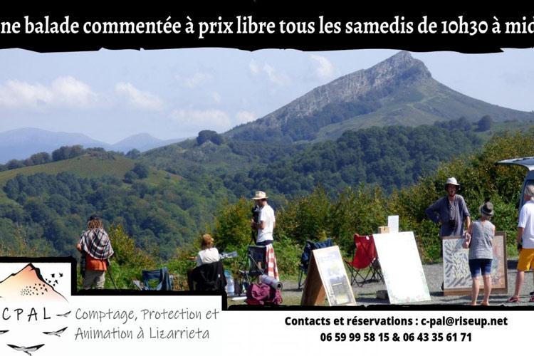 Balade oiseaux sare- idées sorties pays basque week-end 16 octobre